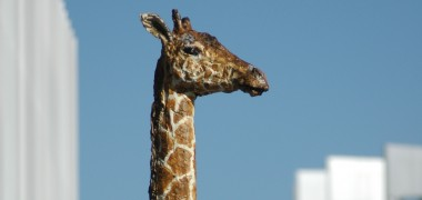 Balkenhol Homme-Girafe Arte