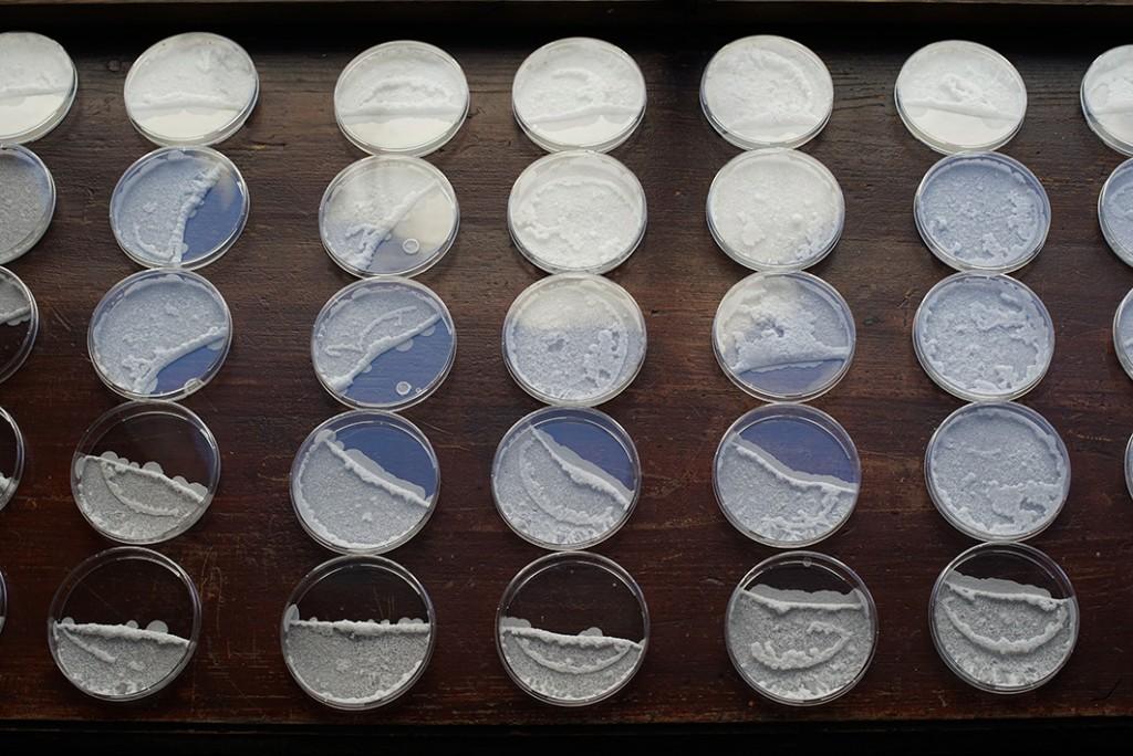 Hanna Husberg, Being with, 2015 / Phytoplancton, bouteilles, pompes à air, cristaux de sel, boites de pétri, vidéo Production CEAAC