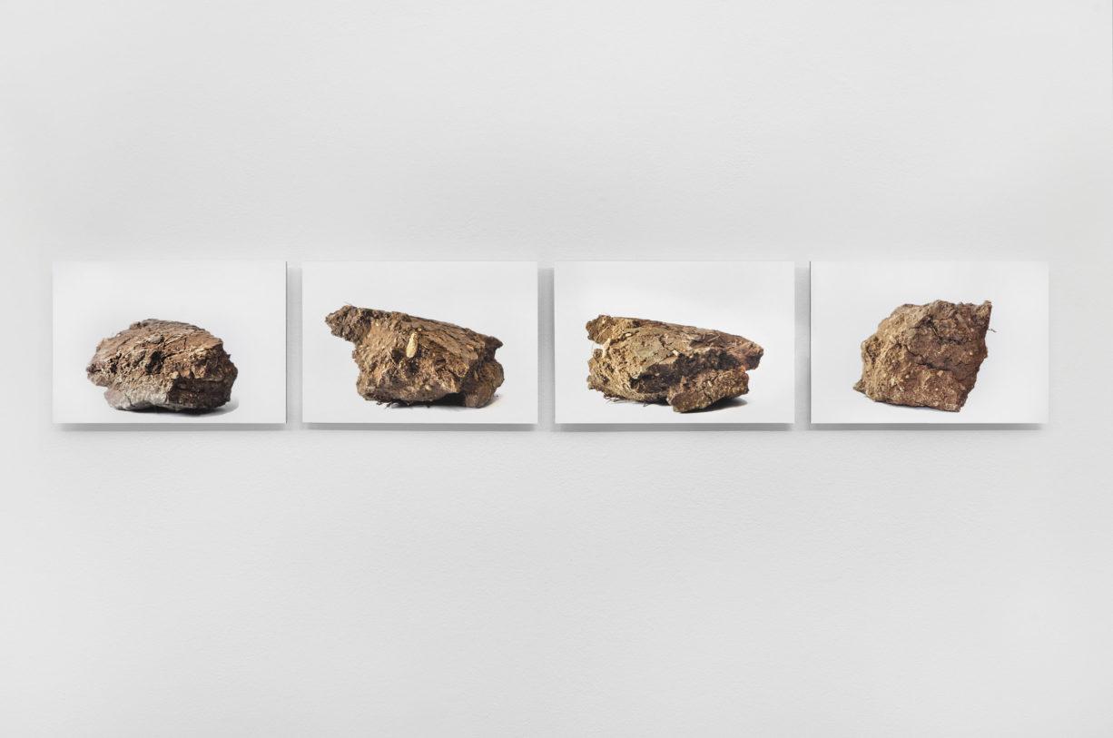 Mathilde Caylou, Mottes (série), photographies numériques © photo: R. Görgen.